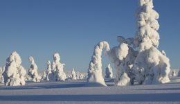 Win A Trip To Lapland For 2