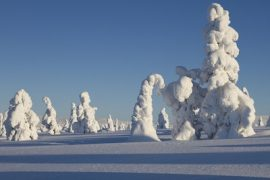 Win A Trip To Lapland