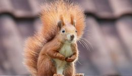 Win Prizes Playing Squirrel Warriors Slots